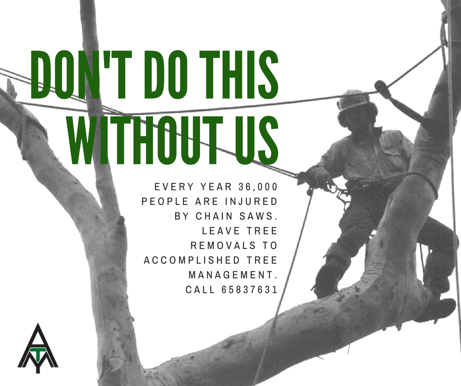 Accomplished Tree Management - Tree Removal Services - website created by Vermilion Pinstripes Port Macquarie